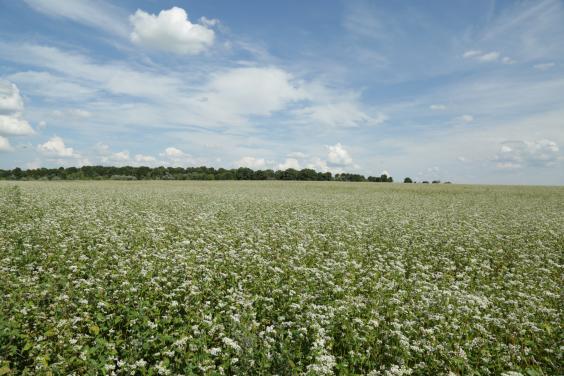 В Україні зареєстровано 1994 земельні угоди