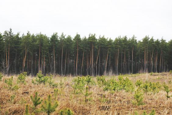 У ХОДА обговорили заходи щодо запобігання пожежам у лісах